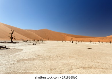 Dead Vlei - Sossusvlei in the Namib Desert, Namibia, Africa