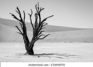 Dead Vlei in Sossusvlei National Park - Namib-Naukluft National Park, Namibia, Africa. black and white.