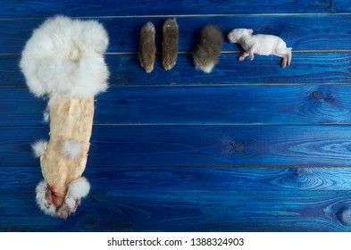 A dead white rabbit and a rabbit skin on a blue Board and part of the rabbit