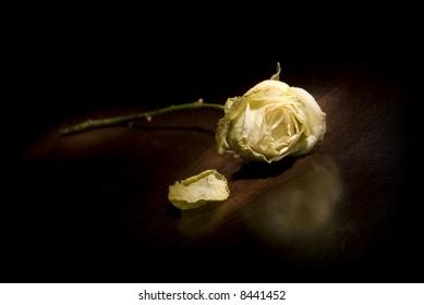 dead white rose on dark wood table