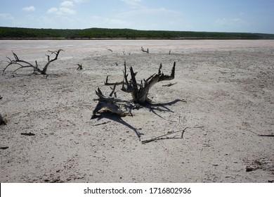 Dead wood branches sand beach