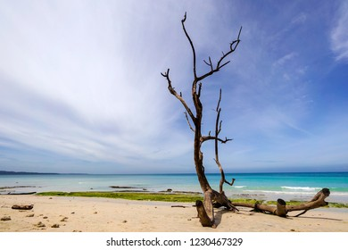 Dead wood on the sandy beach of Andaman Nicobar islands with bright blue sky and pristine ocean in the background