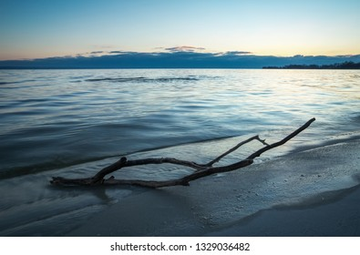 Dead wood in the sea. A snag on the sand of the beach