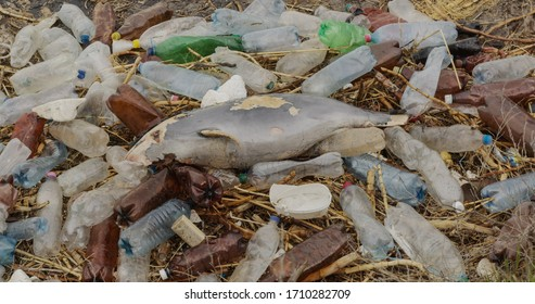 Dead young dolphin on the sea shore. Plastic garbage environmental pollution problem, ecological catastrophe.