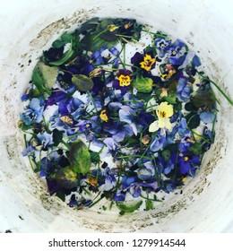 Deadheading winter flowers