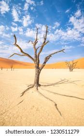 Deadvlei area in Namib desert