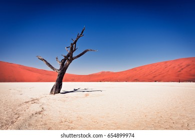 Deadvlei clay pan in Namibia