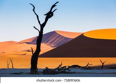 Deadvlei, Dead Acacia Camel Thorn Trees, Namib Desert, Namibia, Africa
