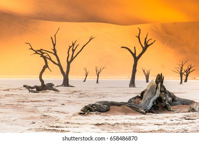Deadvlei (dead marsh)i, a white clay pan in the Namib-Naukluft Park in Namibia.