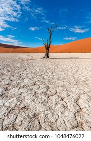 Deadvlei Dead trees in sossusvlei, Namib desert in Namibia. Beautiful dunes in landscape of lone petrified trees. Deadvlei is a white clay pan located near the more famous salt pan of Sossusvlei