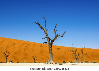 Deadvlei, Namibia, Africa. The trees, are believed to have died 600–700 years ago, are now black because the intense sun has scorched them.