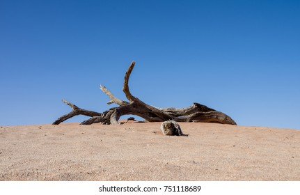 Deadvlei in Namibia is a flat clay pan characterized by dark, dead camel thorn trees contrasted against the white pan floor