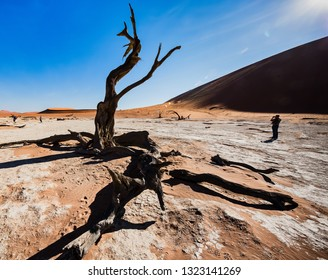 Deadvlei, Namibia, June 2018: Deadvlei salt pan among the dunes of the Namib desert at  Sossusvlei in Sesriem  with a dried acacia tree