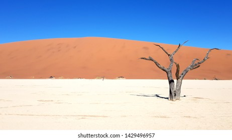 Deadvlei, Namibia -  a place where you find peace and silence.