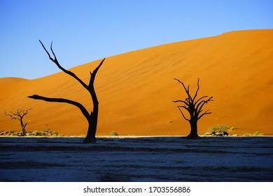 Deadvlei -Namibia, silhouette of tree