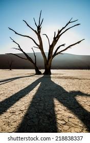 Deadvlei shadow