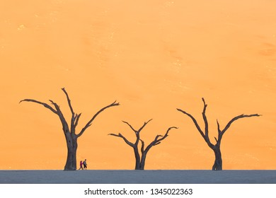 Deadvlei, Sossusvlei, Naukluft National Park, Namibia - August 1, 2018 : Two tourists are dwarfed by the 800 year old camel thorns in Deadvlei. The trees died when their water supply was cut off.