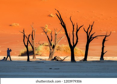 Deadvlei/Namibia - June 2, 2018: A man next to hundreds of years old tree skeletons in Deadvlei, Namibia.