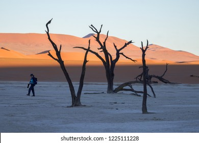 Deadvlei/Namibia - June 2, 2018: Tourist next to hundreds of years old tree skeletons in Deadvlei, Namibia.