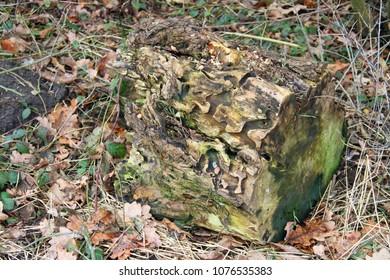 Deadwood with beetle frass