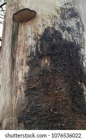 Deadwood with tree fungus