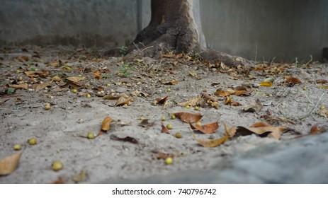 Deaf Leaf Autumn Background Walpaper
