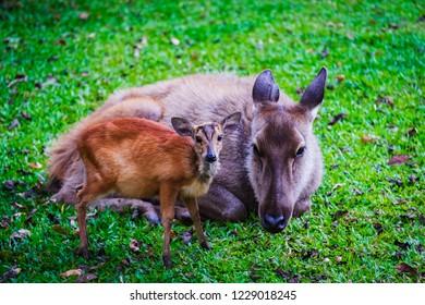 Dear and baby cute dear on the grass