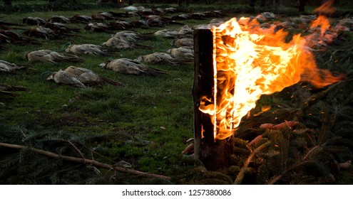 Death pheasants with burning wood