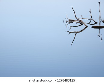 Death tree stand on silence water surface