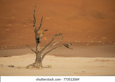 Death Tree without Leaves in the Death Vlei-Namibia