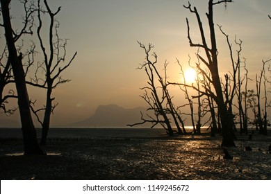 Death trees in mangove forest at beach of Bako Nationalpark in Malaysia