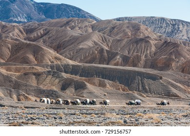 Death Valley 49ers Wagon Train, CA, USA