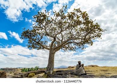 Debre Damo / Ethiopia - November 15 2005: A monk sits and reads a bible under the shade of a single tree.