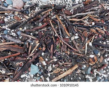 Debris of tree branches after storm on sandy beach as background or texture. Discards on beach - abstract background. Florida beach Debris. Pile of wood branches debris, pebbles or gravel background.