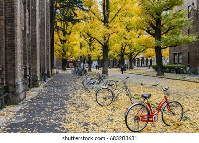 Dec 2017 in Tokyo - Bicycle parked at the midst the ginkgo leaves in Tokyo university
