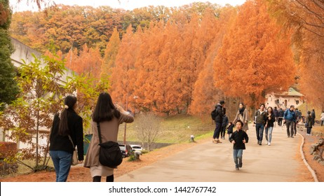 Dec 2018 - Saitama, JAPAN: Akebono Children's Forest Park at Hanno City, Saitama, Japan is a popular outdoor park especially during autumn when metasequoia trees are all in red.