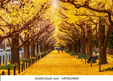 DEC 5, 2018 Tokyo, Japan - Tokyo yellow ginkgo tree tunnel at Jingu gaien avanue in autumn with tourist enjoy scenery. Famous attraction in November and December