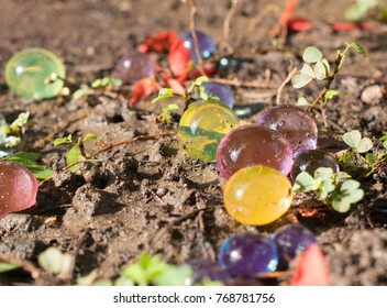 Dec2017, Honiara, Solomon Islands, Hygroscopic bubbles lie between leaves and red flower petals in the mud