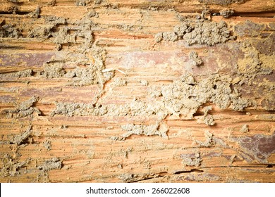 Decay wood texture background