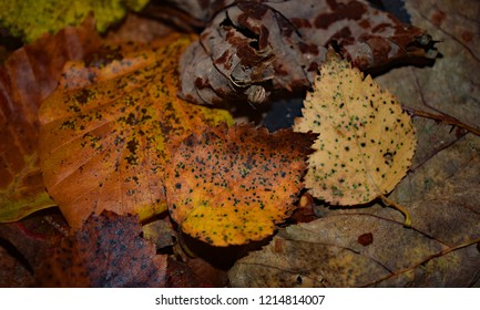 Decaying autumn leaves