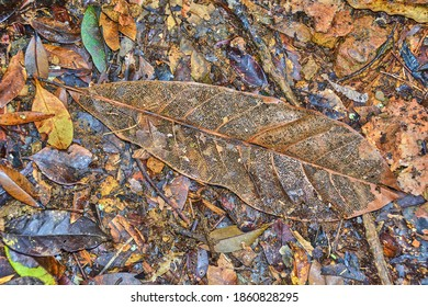 Decaying leaf in the rainforest