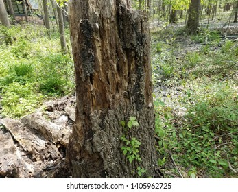decaying tree trunk and green plants and leaves in forest