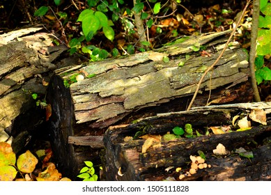 A decaying tree trunk on the forest floor with selective focus directed to the center of the image with the foreground and background blurred.