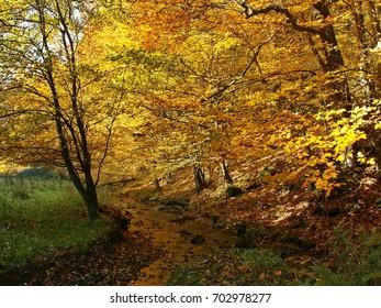 Deciduous forest in autumn