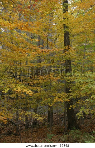 Deciduous Forest in Fall Colors