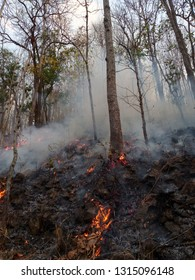 Deciduous Forest fire. Burned trees wildfire, pollution and smoke