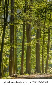 Deciduous forest in Lower Saxony, Germany, Europe
