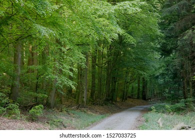 Deciduous forest with path in spring, Bavaria, Germany, Europe