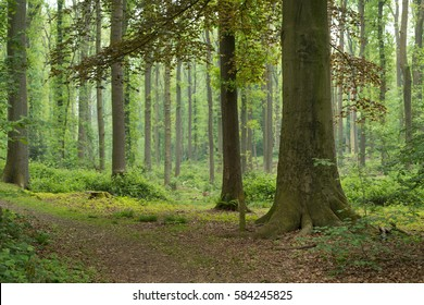deciduous forest in spring time