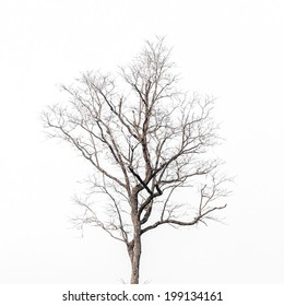 Deciduous tree crown on white background